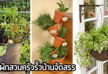 สวนบ้านจัดสรร,จัดสวนผักสวนครัว,ปลูกผักริมรั้ว