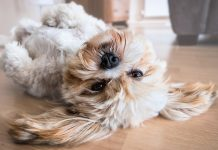 allowing pets in your rental property