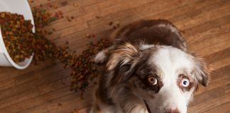 Keeping your home clean with pets
