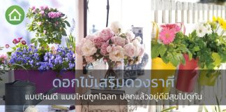 ดอกไม้เสริมดวง-1